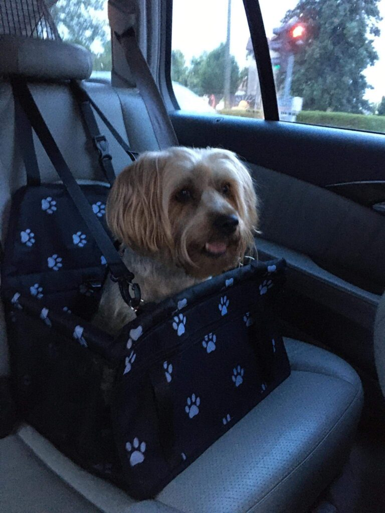 Car Dog Seater photo review